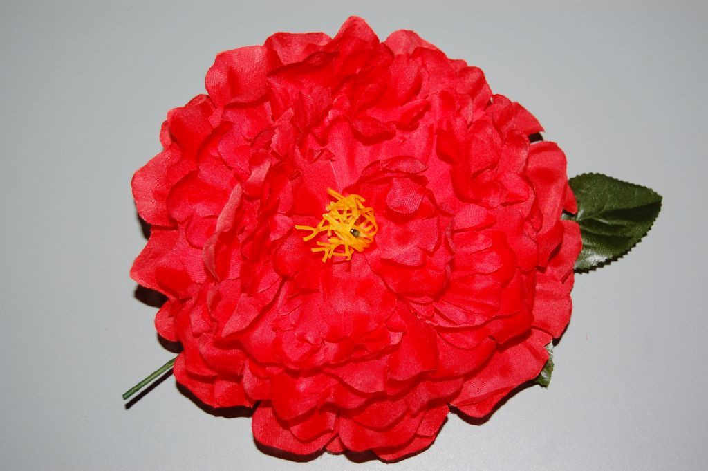 Great flower Red Dahlia