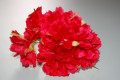Red Carnation corsage