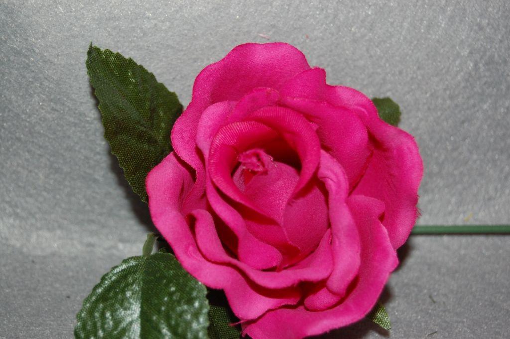 Small Fuchsia flower