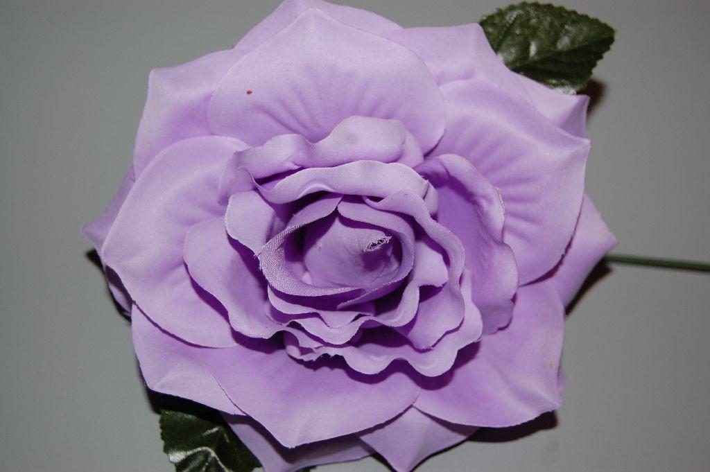Flower violet sevilla