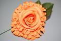 Orange trimmed flower